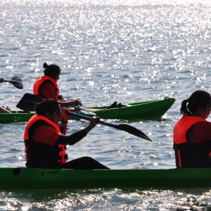 Full Day Eco Tour (Kayak) (6 hours)